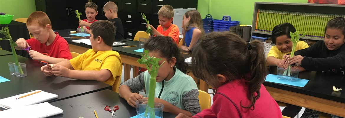 Mrs. Herndon's Science class at East Elementary.